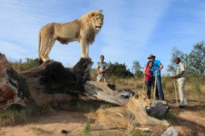 Conrad Pezula_Walking with lions-1