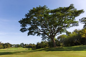 Golfclub Chiang Rai 3- klein